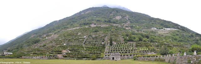 Panorama sur un secteur du vignoble en terrasse de Donnas (Vallée d'Aoste, Italie)
