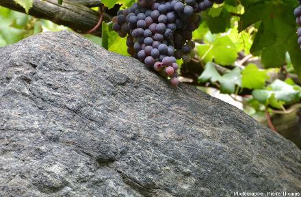 Grappe de raisin posée sur un bloc d'éclogite (on devine l'association grenat-glaucophane) très folié, Vallée d'Aoste, Italie