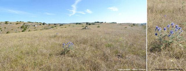 Paysage et flore caractéristiques des Grands Causses, quelque part sur le Causse Noir (Aveyron)