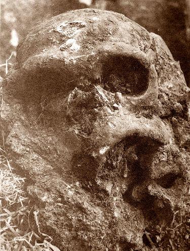 Photographie de 1908 montrant le crâne de l'Homme de la Chapelle-aux Saints seulement à moitié dégagé et encore pris dans sa gangue argilo-calcaro-sableuse