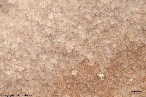 Détail des cristaux cubiques de halite tapissant le fond de l'étang du Lavalduc (Bouches du Rhône)