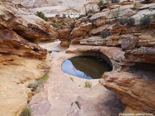 Des marmites de géant (potholes) atteignant près de 2m de diamètre, creusées dans les grès Navajo du Parc national de Capitol Reef, Utah (secteur de Capitol Gorge)