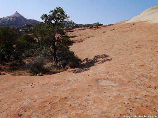 Waterpockets au sens strict à la surface des grès Navajo, dans le Parc national de Capitol Reef, Utah (secteur de Cassidy Arch)