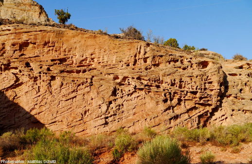Multiples taffonis sensu lato dans une paroi de grès Navajo, dans le Parc national de Capitol Reef (entrée du canyon de Grand Wash)