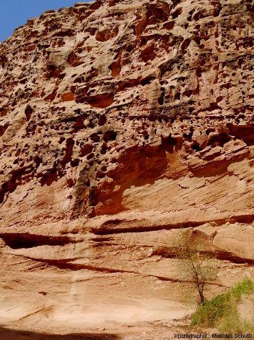 Multiples taffonis sensu lato dans une paroi de grès Navajo, dans le Parc national de Capitol Reef (entrée du canyon de Capitol Gorge)