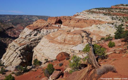 Vue sur la Cassidy Arch, sculptée dans les grès Navajo clairs, Parc national de Capitol Reef