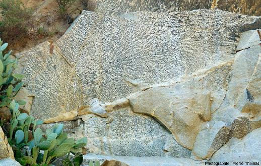 Au fond d'une carrière à San Piero in Campo (ile d'Elbe, Italie), sur plusieurs mètres carrés, une surface plane expose une structure qui ressemble à une gigadendrite