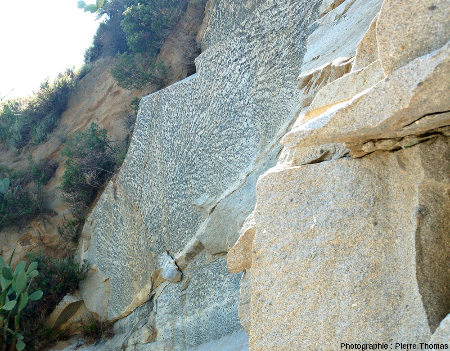 Vue latérale de la giga-dendrite de tourmaline de la carrière de San Piero in Campo (ile d'Elbe, Italie)