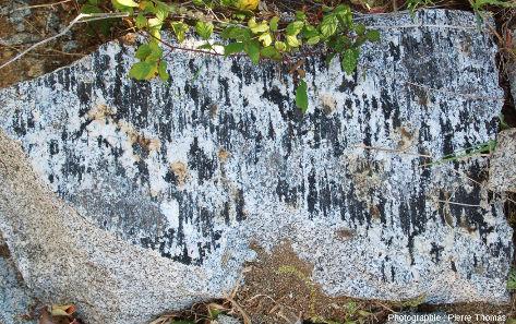 Autre plan à tourmalines orientées dans les carrières de granodiorite de San Piero in Campo (ile d'Elbe, Italie)