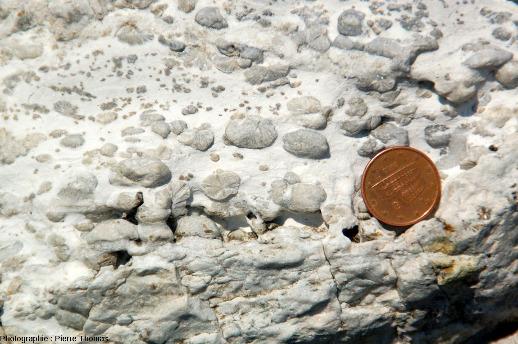 Sphérolites de wollastonite dans un niveau de marbre (méta-calcaire), Cap de Norsi, ile d'Elbe