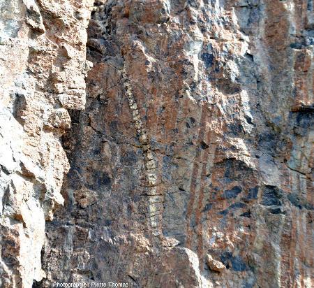 Détail du petit filon de gabbro de la figure précédente qui recoupe nettement le litage harzburgite – pyroxénite, Amiantos, Chypre