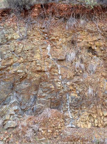 Micro-filons sinueux et à bords flous, entourés de dunite au sein d'une harzburgite, Ardrasan, Turquie