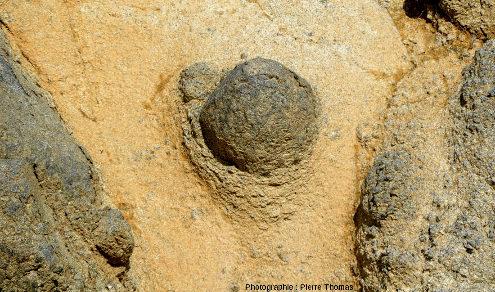 Détail de la petite boule de gabbro qu'on voit au centre inférieur droit des images précédentes