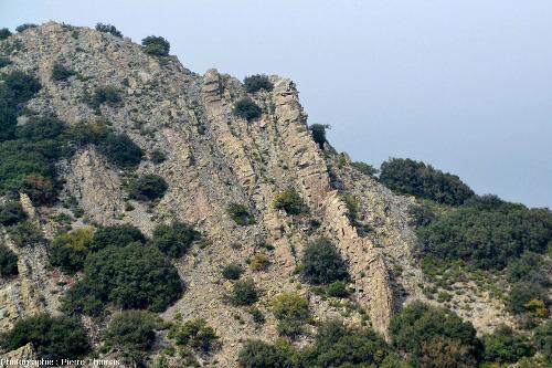 Réseau de filons de diabase / dolérite constituant l'ensemble de lamontagne dominant le village de Lagoudera, ophiolite de Chypre