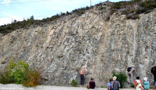 Autre bord de route chypriote montrant la coalescence des filons dans le cortège filonien ophiolitique