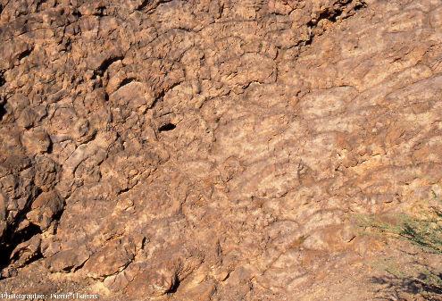 """Les basaltes en coussins de l'affleurement """"Geotimes"""" (Oman), vus en """"coupe transversale"""""""