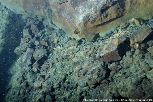 Brèche pyroclastique au pied d'un escarpement d'une coulée basaltique de la ride Est pacifique, 15°N
