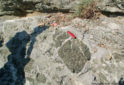Autre vue de la brèche sédimentaire des images précédentes, où un ciment calcaire fossilifère englobe des blocs de serpentinite, ile d'Elbe (Italie)