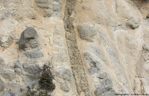 Zoom sur un filon de basalte (coloré en brun par l'altération hydrothermal) recoupant des gabbros isotropes près de Chandria, ophiolite de Chypre