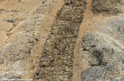 Gros plan sur un filon de basalte (coloré en brun par l'altération hydrothermal) recoupant des gabbros isotropes près de Chandria, ophiolite de Chypre