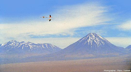 Outre ses beautés évaporitiques et volcaniques, le salar d'Atacama (Chili) est réputé pour son avifaune dont, entre autres, trois espèces de flamants