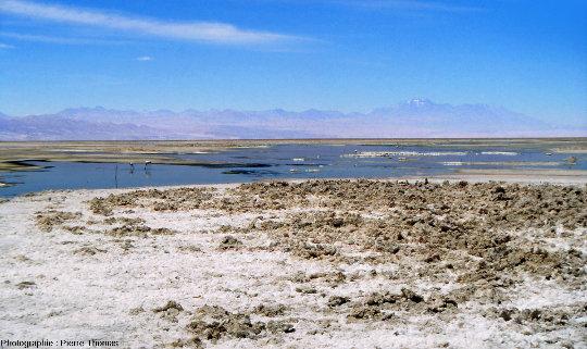 Lagune salée, croutes de sels et flamants, salar d'Atacama (Chili)