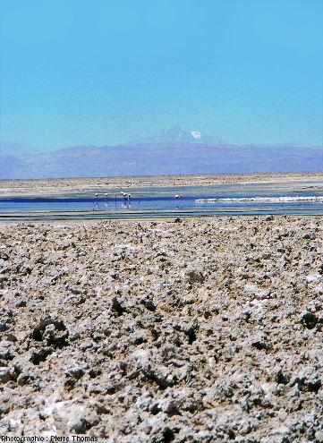 Croutes de sel, lac salé et flamants, salar d'Atacama (Chili)