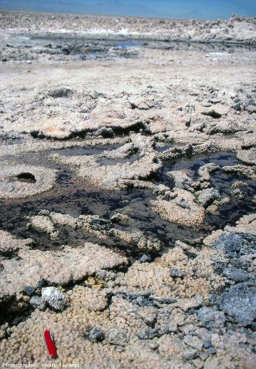 Concrétions carbonatées en forme de tapis de microsphères à signification de stromatolithes, salar d'Atacama (Chili)