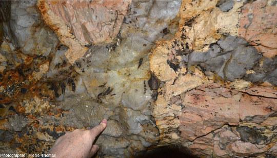 Chauve-souris accrochée à la limite entre un quartz et un feldspath pluri-décimétriques, pegmatite des Monts d'Ambazac (Haute-Vienne)