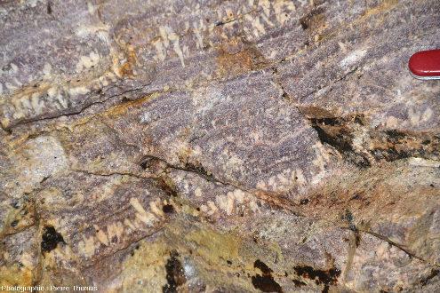 """Détail de cette aplo-pegmatite litée à lépidolite et feldspaths """"triangulaires"""""""