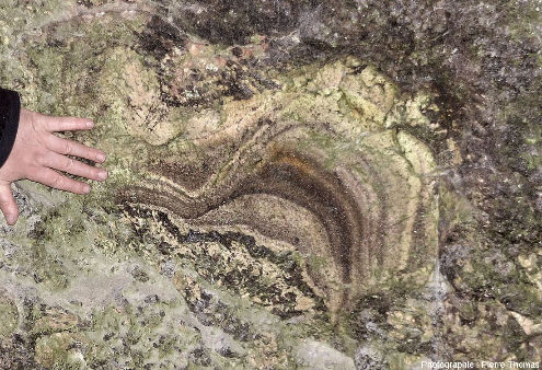"""""""Dômes"""" d'aplite litée ayant crû sur une pegmatite classique montrant ce qui ressemble à des structures de recoupement voire de granoclassement (ou de tri par densité)"""