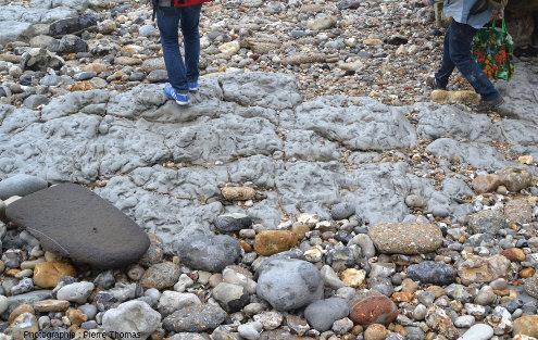Zoom sur des bancs calcaires situés au pied du Cap de la Hève, juste au Nord-Est du Havre