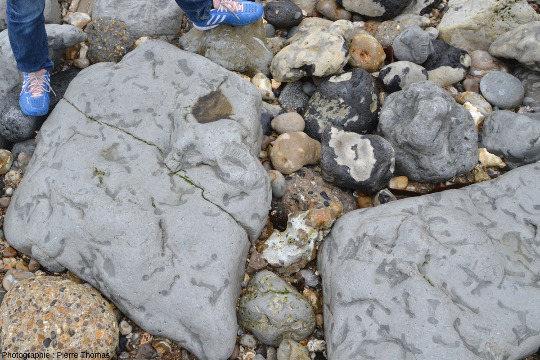 Détail de bancs calcaires situés au pied du Cap de la Hève, juste au Nord-Est du Havre
