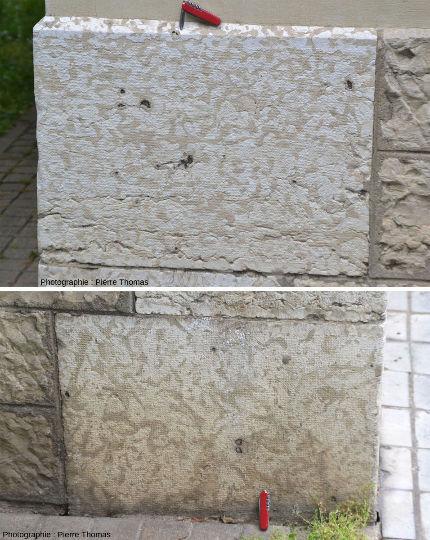 Montage photographique juxtaposant une coupe verticale (en haut) et une coupe horizontale (en bas) de blocs de calcaire bathonien à thalassinoïdes