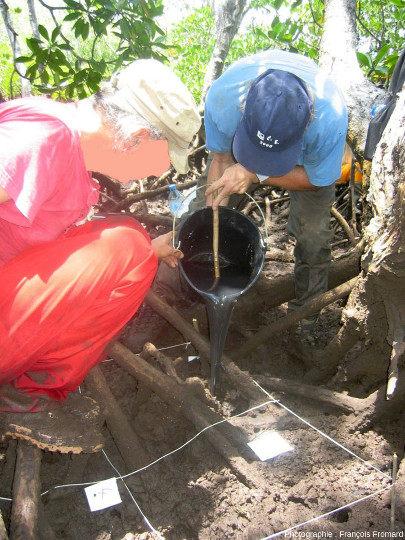Membres d'une équipe d'ECOLAB en train de couler un mélange d'une résine liquide et d'un durcisseur dans les terriers d'un crabe vivant dans la mangrove de Malamani sur l'ile de Mayotte