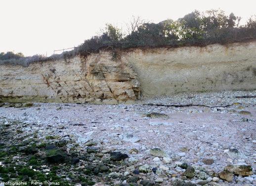 Faille affectant le Crétacé supérieur (Cénomanien supérieur – Turonien basal) de la falaise de Port des Barques (Charente Maritime), falaise bordée (à gauche) par l'estuaire de la Charente