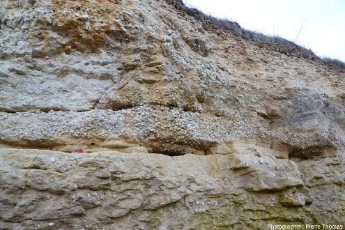 Lumachelle à Exogyra columba visible au centre de la figure 9, mais situé à plusieurs dizaines de mètres plus à l'Est, Port des Barques (Charente Maritime)