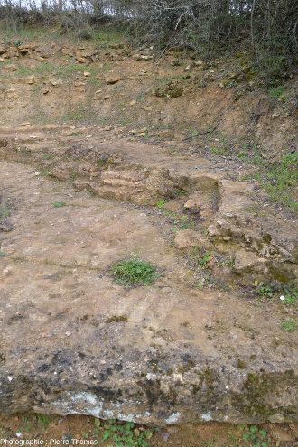Surface d'une strate de la carrière des Hauts Coteaux