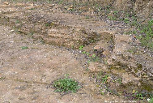 Zoom sur la surface d'une strate de la carrière des Hauts Coteaux