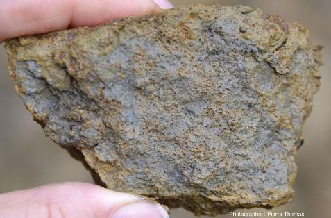 Calcaire à oolites d'hydroxydes ferriques du Toarcien de Sainte Verge (Deux-Sèvres)