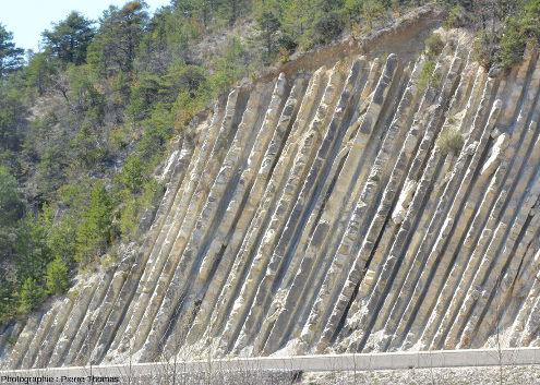 Alternance marno-calcaire le long de la célèbre coupe du Serre de l'Âne, à La Charce (Drôme)