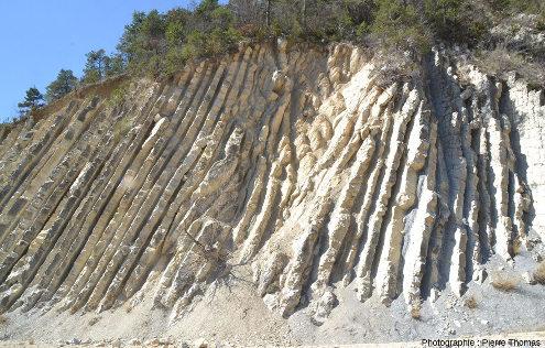 Détail de l'un des deux slumps qui perturbent la régularité des alternances marno-calcaires de la coupe de la Charce