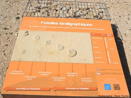 Panneau explicatif à plat disposé sur le sentier d'interprétation et montrant ce que sont les ammonites et quelques espèces du Valanginien et de l'Hauterivien