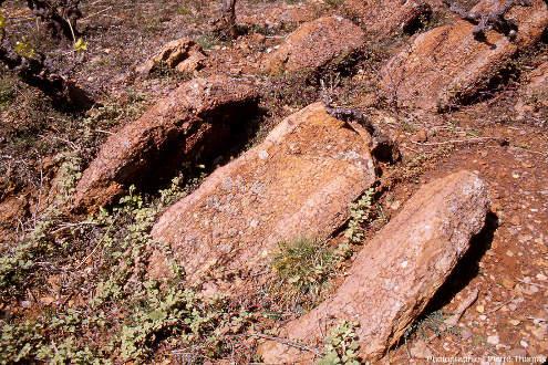 Vue globale sur des strates redressées (et inversées) de calcaire griotte du Famennien (Dévonien terminal, 372 à 359Ma) au Puech de la Suque (Saint-Nazaire-de-Ladarez, Hérault)