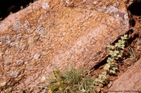 Le Dévonien supérieur de la Montagne Noire: ses calcaires griottes, sa carrière de Coumiac avec sa dalle à goniatites et son GSSP Frasnien-Famennien, Saint-Nazaire-de-Ladarez et Cessenon-sur-Orb, Hérault