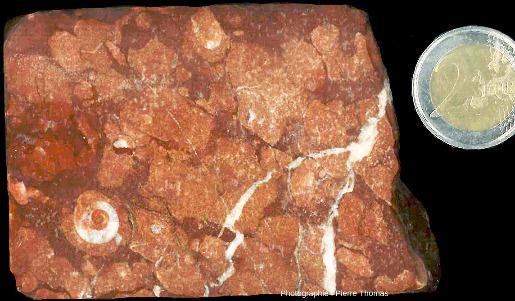 Autre section coupée (mais non polie) d'un calcaire griotte de la montagne Noire