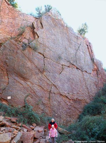 Vue globale (de face) du «mur à goniatites», carrière de Coumiac, Cessenon-sur-Orb (Hérault)
