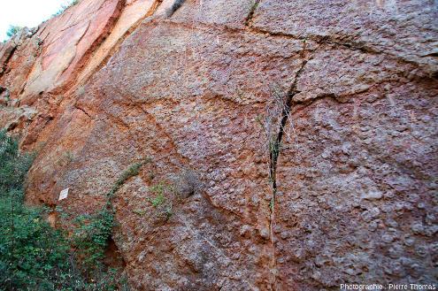 Vue globale (de profil) du «mur à goniatites», carrière de Coumiac, Cessenon-sur-Orb (Hérault)