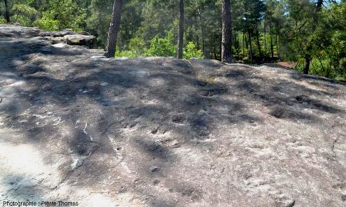 Deuxième secteur de la dalle à empreintes de dinosaures d'Ucel (Ardèche)
