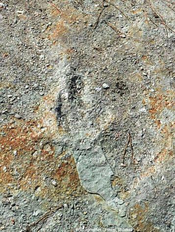 Détail d'une des empreintes de dinosaures visibles sur la figure précédente, Ucel (Ardèche)